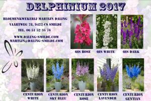 folder-delphinium